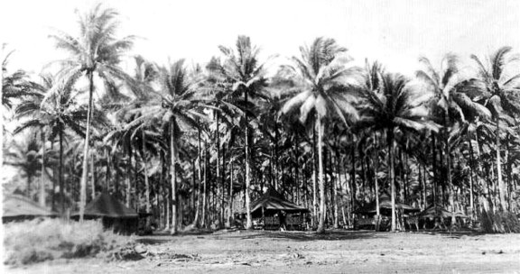 A view of a camp site set in the cocoanut palms. Living conditions on Morotai evolved into an Eden compared to New Guinea, except here we had almost nightly enemy air raids.