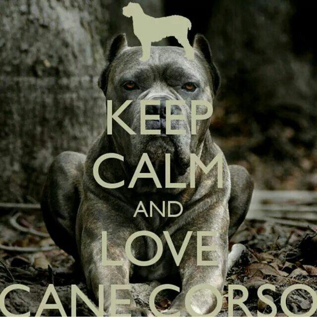 Keep Calm and Love a Cane Corso