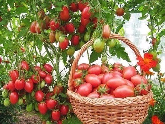 Чтобы было больше помидоров, чем зелени на них