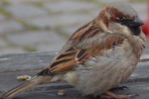 Dopasuj nazwę do zdjęcia ptaka.