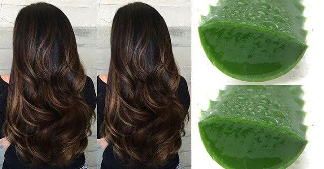 A hidratação de babosa é ideal para nos cabelos secos, cacheados e ressecados. Aprenda como fazer e recupere seu cabelo. O resultado é maravilhoso.