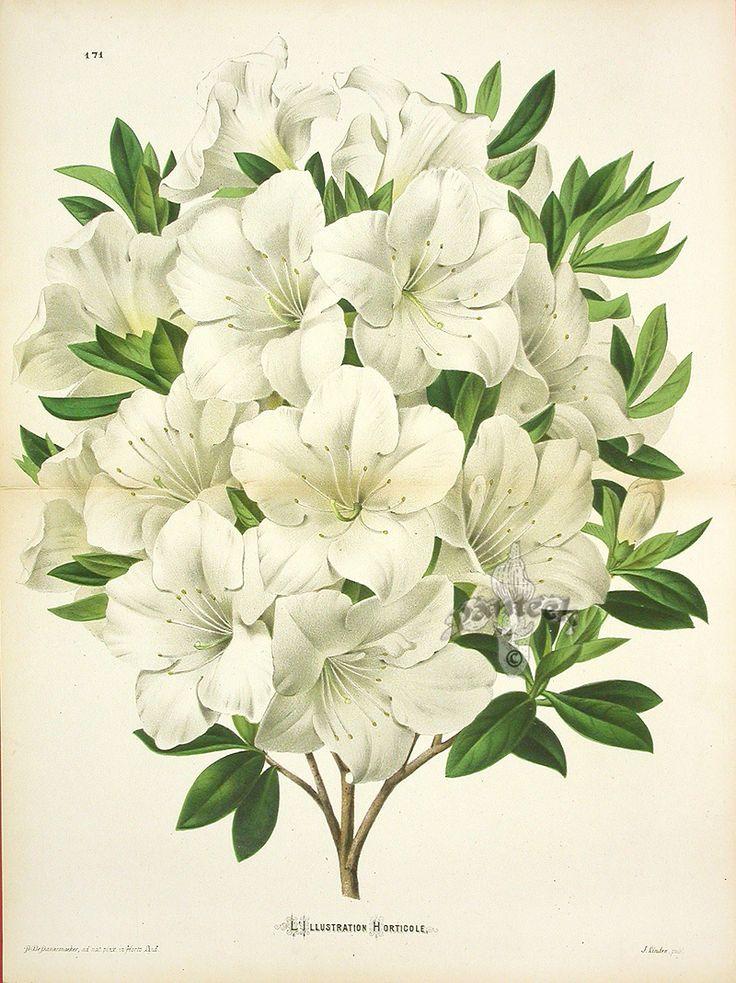Les 217 meilleures images du tableau botanicals and for Botanic fleurs artificielles