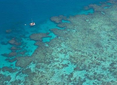 La Grande barrière de corail sera