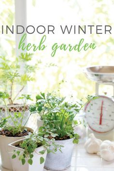 Enjoy healthful, delicious herbs year round with these tips for growing culinary herbs indoors.