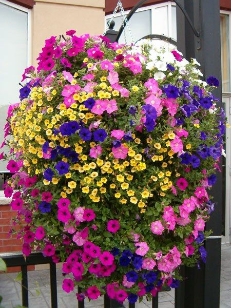Hanging baskets make my day,  how pretty!