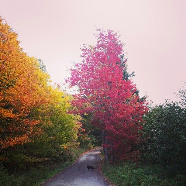 Margaree Fall Colours
