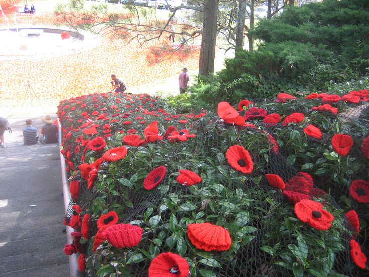 Poppy project Gosford April 2015 | Flickr - Photo Sharing!