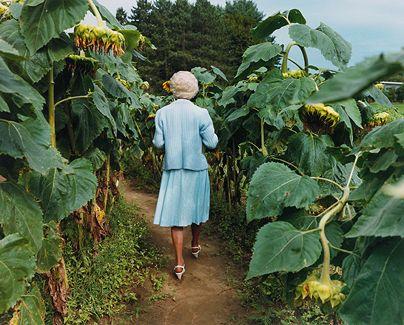 Trudy in Annie's Sunflower Maze, Amherst, Massachusetts, 2000