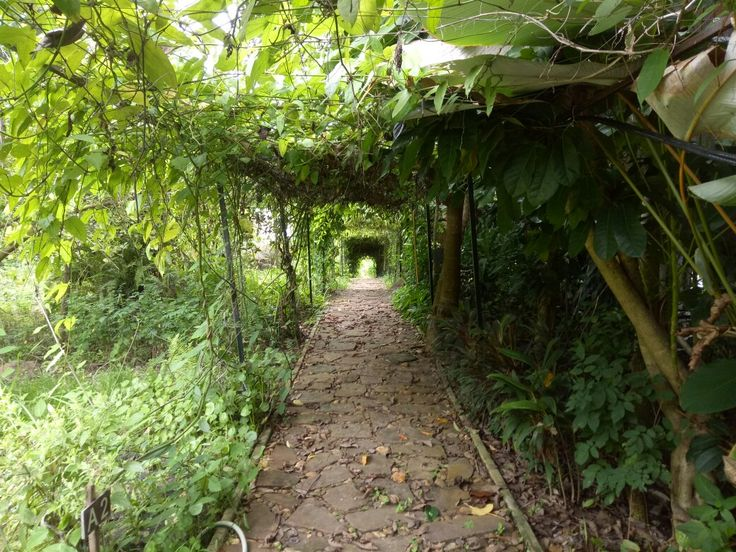 Green Tunnel, Rain Forests Farm,  Phitsanulok,  Thailand