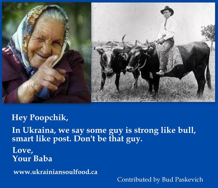 Baba's Ukrainian Proverb about bull and stupid guy