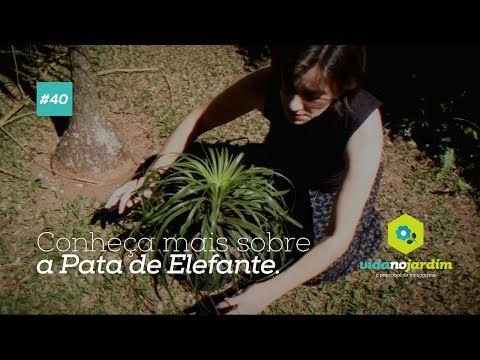 Conheça mais sobre a Pata de Elefante #40 - YouTube