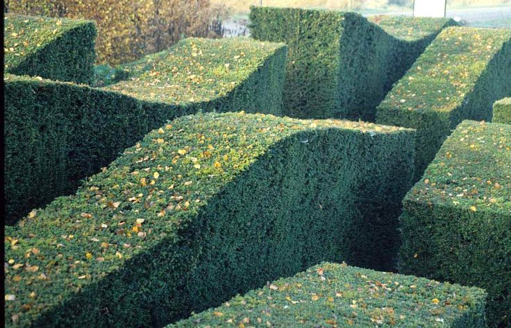 Piet Oudolf Clipped Hedges Play H E D G E R O W