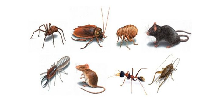 """Pests are everywhere. Though the word """"pest"""" may sound trivial, only people who have had a bad experience with these tiny organisms know how serious an issue this can be. know more https://www.provilink.com/pests-are-everywhere-know-how-to-control-them/"""