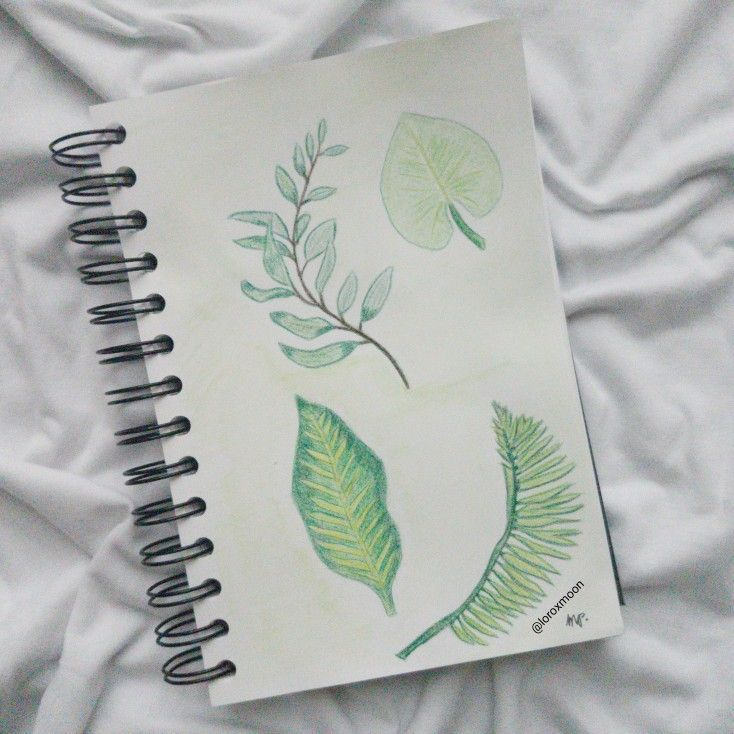 Plants drawing