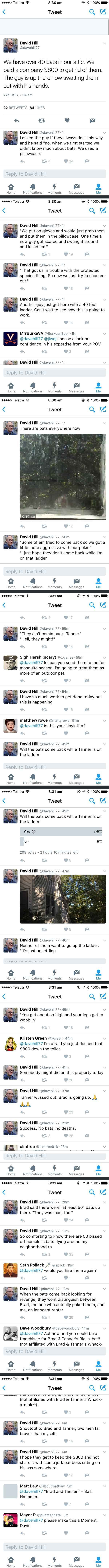 Bat problems? Call Brad and Tanner.