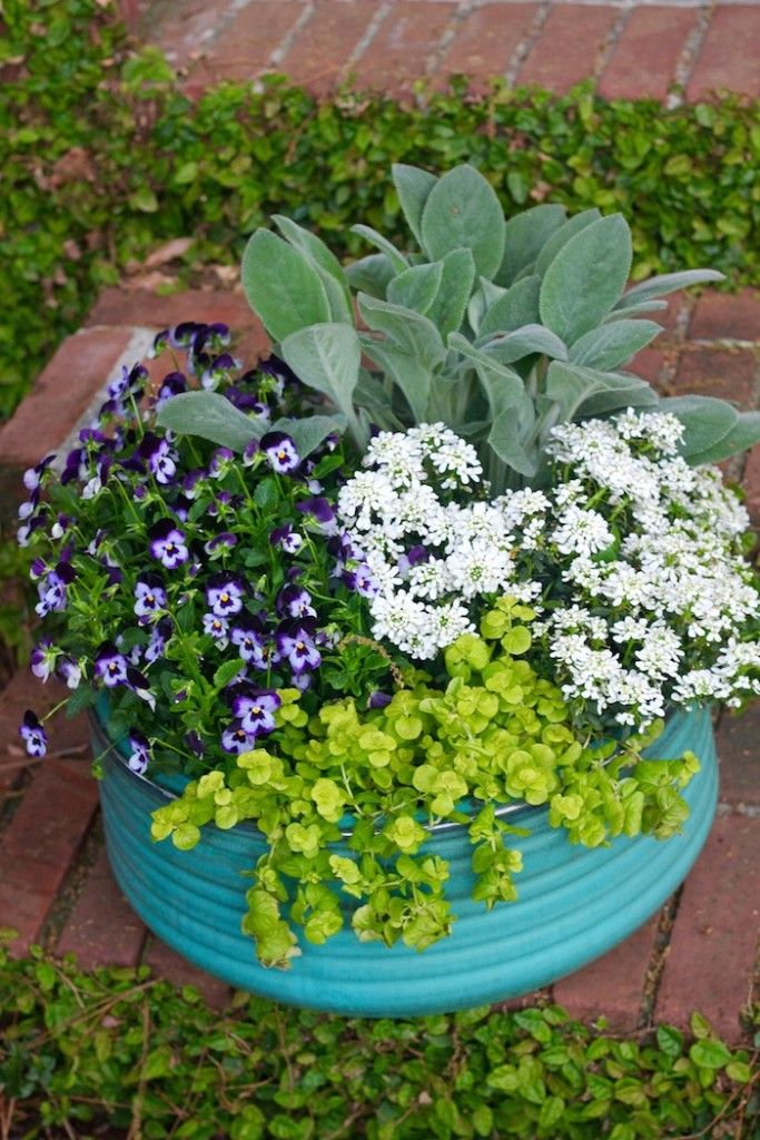 4 Plants for the Cold Days in Spring Drop by and learn how to create this beautiful container garden.  Get all the info you need to make one of your very own