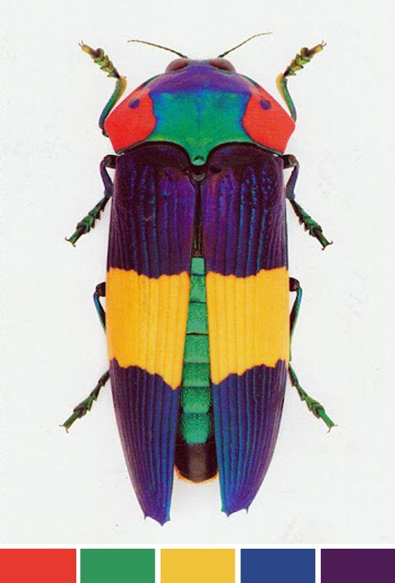 achados-da-bia-perotti-blog-inspiracao-do-dia-cores