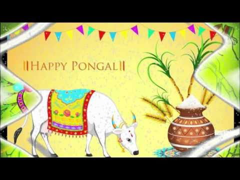 Happy pongal 2016 Sayings | Happy pongal 2016 Latest Wishes/SMS/Greeting...