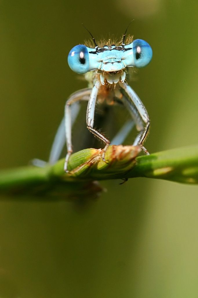 ~ Dragonfly - Up Close and Personal Head Shot ~