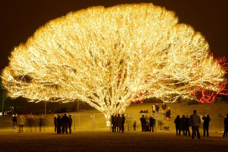How This Christmas 'Tree of Life' Was Made & Where You Can See It in Person on LDSLiving.com