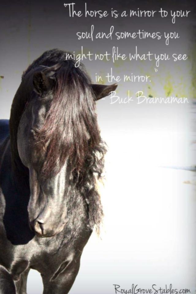 Het paard als systemische spiegel. Paarden zijn gevoelige wezens. Ze zijn heel alert. Ze reageren op de minste verandering in hun omgeving en hun kudde. De onderlinge relaties zijn voortdurend in beweging. Paarden voelen precies aan wie wij zijn. Ons hele hebben en houwen doet ertoe. www.CV-Coaching.nl