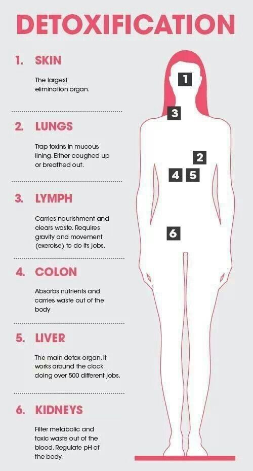 Six Main Detox Organs Skin Lungs Lymph Colon Liver