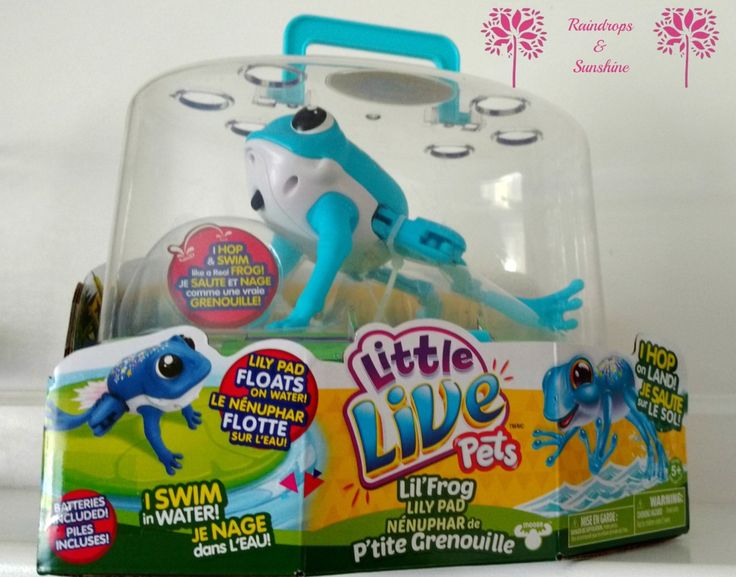 Creating a Little Live Pets Zoo With Help From Lil Frog
