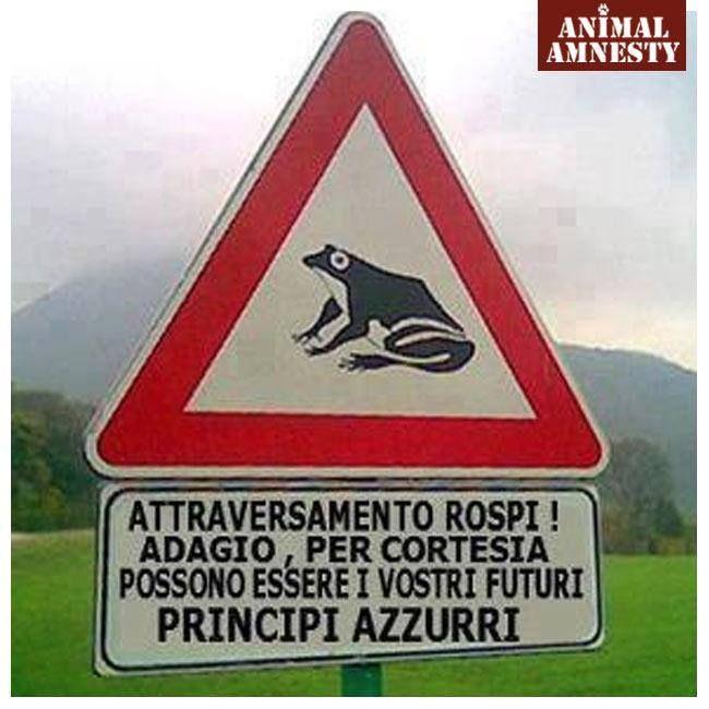 Attenzione: attraversamento #rospi, potrebbe esserci il tuo #principe azzurro!