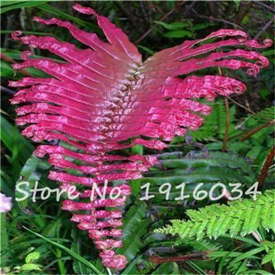 100Pcs Colorful Fern Seeds Rare Creeper Vines Grass Mixed Foliage Plants Bonsai Exotic Plant for Flower Pots Planters hot sale