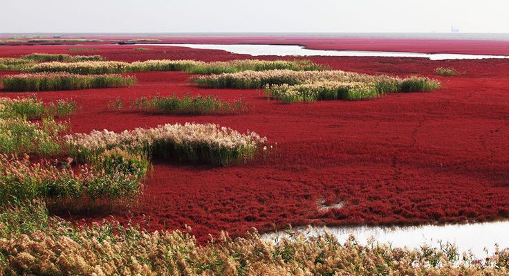 La Red Beach si trova sul delta del fiume Liaohe, a circa 30 km a sud ovest di Panjin, sull'area acquitrinosa di ben 100 chilometri quadratiche formano la più estesa area paludosa del mondo. La spiaggia prende il nome dal suo aspetto, causato da un tipo di alga (Chenopodiaceae, Suaeda salsa) che fiorisce nella soluzione salina-alcali del suolo che in autunno diventa rosso fiammante. L'accesso alla gran parte di questo …