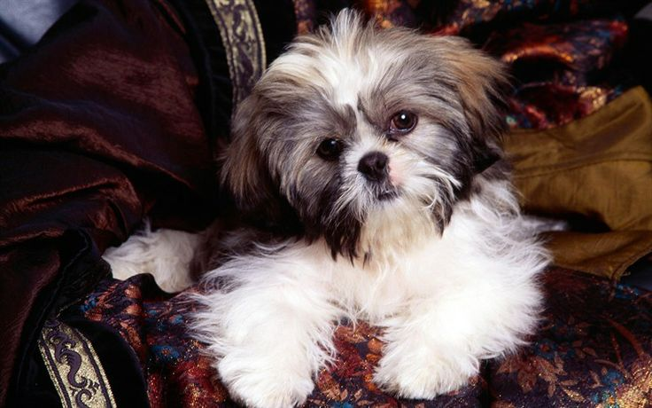 1000 Ideas About Cheap Puppies For Sale On Pinterest