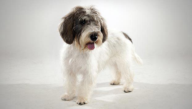 + 50 imágenes mascotas Amigurumi: Peluches tejidos para regalar | Animales Hoy