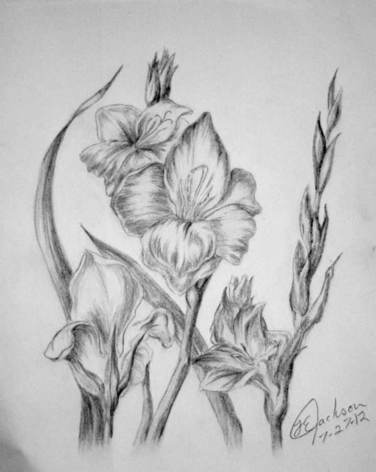 17 best images about flowers drawing of gladioli on for Unique sketches