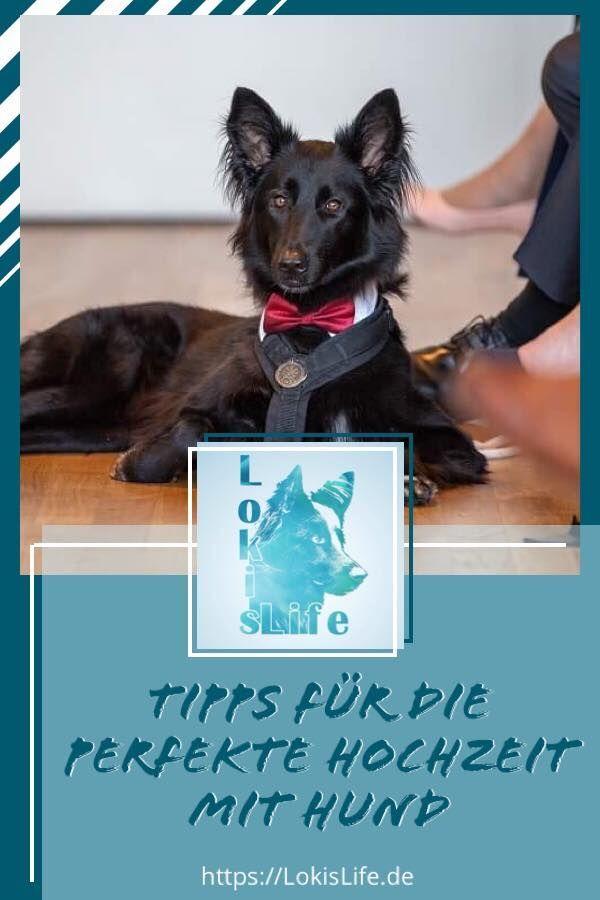 Hochzeit Mit Hund Hunde Hundchen Training Hundetraining