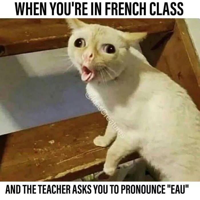 Funny Cat Memes Funny Animal Memes Funny Animals