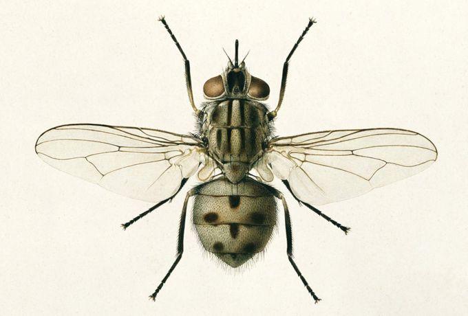 Короткая и мудрая притча о пчеле и мухе. Кто что ищет. то и найдет (Позитивное мышление)