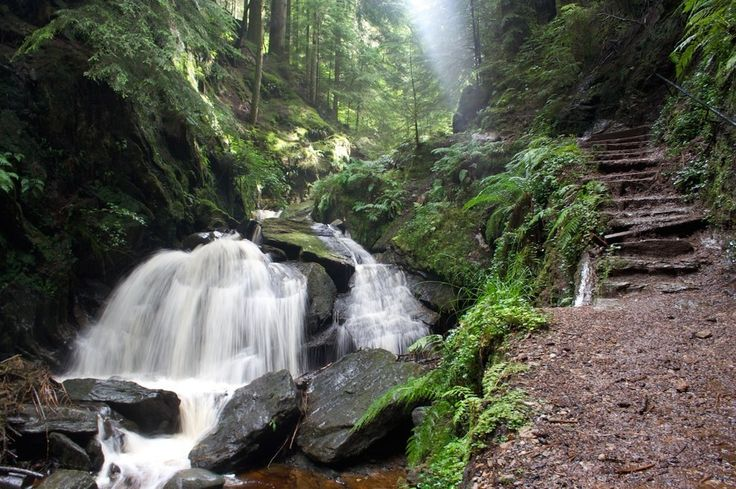 The rainforest? It might look Amazonian, but this pretty gorge is actually Puck's Glen, near Dunoon, in the west of Scotland. The tumbling, rocky burn that runs through the glen is criss-crossed by pretty wooden bridges, giving it a Lord of the Rings-style charm.