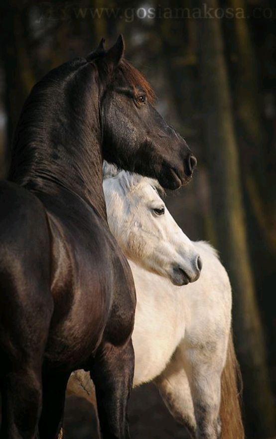 Die Munchkin-Katze ist die kleinste Rasse.   – Pferde – #die #ist #kleinste #MunchkinKatze #Pferde