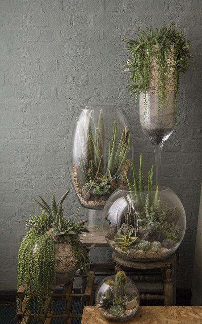 vasi trasparenti in vetro utilizzati come terrarium di piante grasse