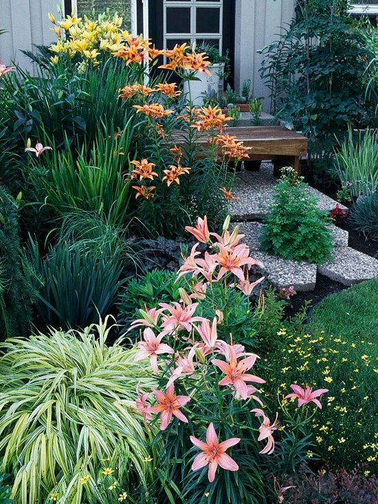 variegated Japanese forest grass or Hakonechloa macra aureola and the Asiatic lilies