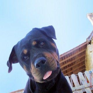 take dog holiday france