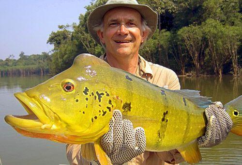 Pesca Esportiva - Tucunaré, o valente das águas | VisitAmazonas