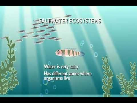 Aquatic Ecosystems- This is a great cartoon on remembering the difference between salt and freshwater ecosystems.