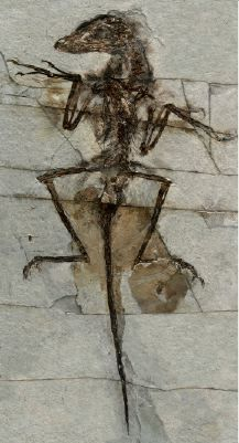 Best What On Earth Happened Images On Pinterest Bones - Evolution visual effects last 130 years