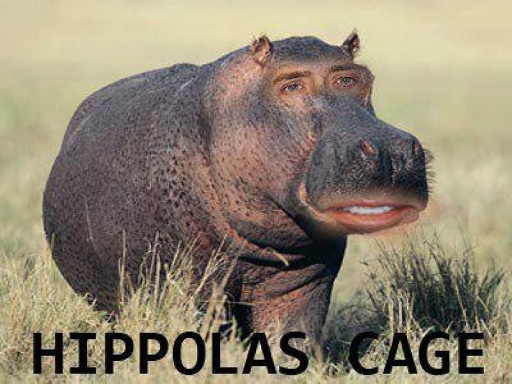 the ratchet sloth | This WordPress.com site is the cat's pajamas......soooo, I googed baby sloths in pajamas...annnddd this came up: Hippolas Cage.....lmfao wtf?!
