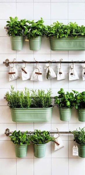herb garden   indoor gardening   apartment living