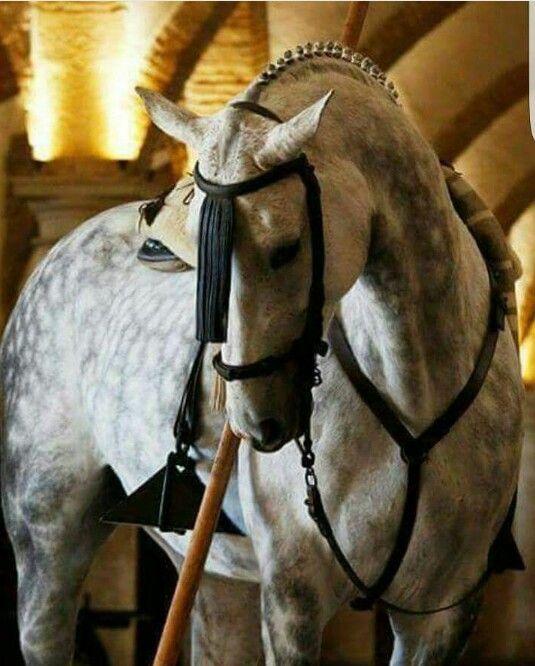 Un caballo fue su cuna y un relincho su sonajero y ella le mecia el menear de su mosquero ....
