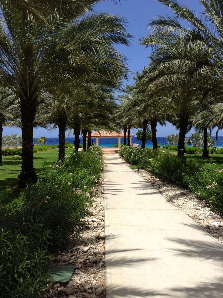 Santa Barbara Beach Curacao #curacao #santabarbara #santabarbarabeach #tropicalisland #palmtrees
