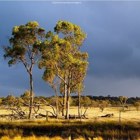 The beautiful countryside of the Glen Innes Highlands.  Down by Black Mountain way.  Photo by James Chambers Imagery