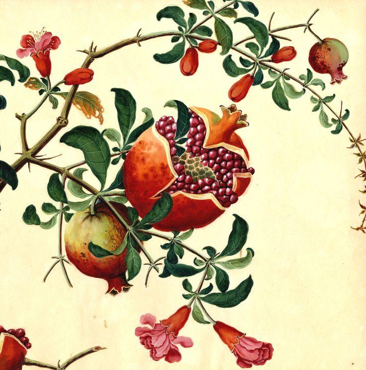 2nd favorite drawing. Harvard University Herbaria - Botany Libraries Archives Arnold Arboretum Chines Watercolors China Trade